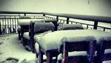 Первый снег в Красной Поляне