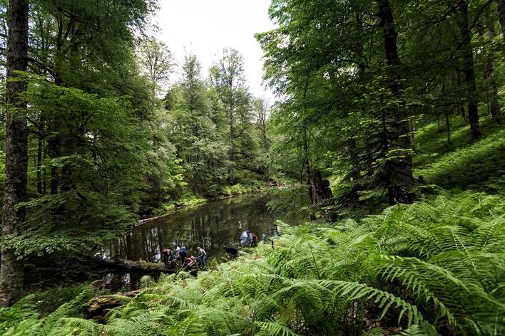 Харгинский лес