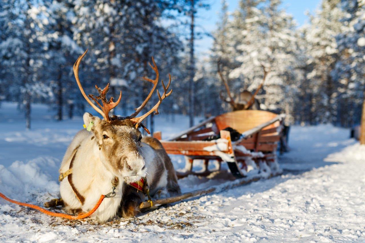 Открывается оленья ферма на«Газпроме»