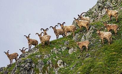 Фотовыставка «Природа Кавказского Заповедника»